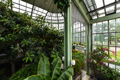 Botanical garden, greenhouse, Kretinga, Lithuania. Indoor view of Kretinga botanical garden, Lithuania royalty free stock photos