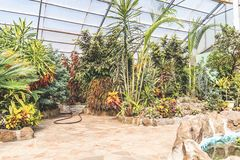 Botanical garden greenhouse with tropical plants and flowers indoors in sunlight. Tropical plants and flowers. Gardening concept. Indoors of greenhouse with royalty free stock photography