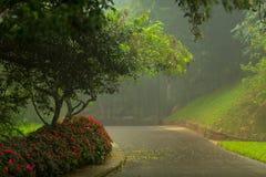 Botanical Garden Hakgala Royalty Free Stock Images