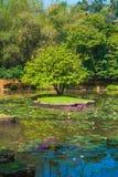 Botanical Garden landscape. In Peradeniya, Kandy, Sri-Lanka Royalty Free Stock Photography