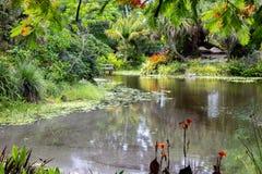 Botanical garden landscape in florida  royalty free stock photos