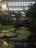 Botanical Garden LEIDEN stock photography