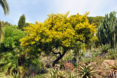 Botanical garden Marimurtra, Blanes Royalty Free Stock Photo