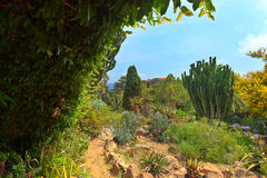 Botanical garden on Mediterranean coast of Spain, Blanes Stock Photography
