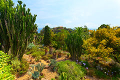 Botanical garden on Mediterranean coast of Spain, Blanes Stock Image