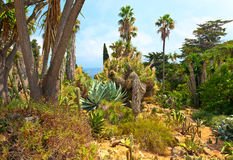 Botanical garden on Mediterranean coast of Spain, Blanes Stock Photos