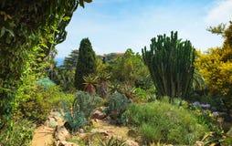 Botanical garden on Mediterranean coast of Spain , Blanes. Royalty Free Stock Images