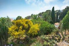 Botanical garden on Mediterranean coast of Spain , Blanes. Stock Photography