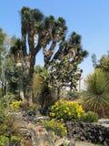 Botanical garden of Mexico City, Mexico. Exotic cactus in the Botanical gardens of Mexico City stock photos