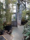 Botanical garden in Moscow. royalty free stock photography