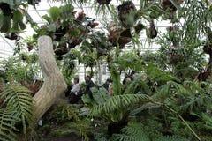 Botanical garden in Munich Royalty Free Stock Photos