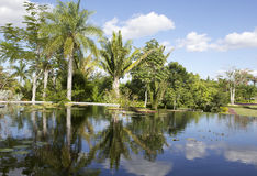 Botanical Garden in Naples 2. The palm trees are reflecting in the water of the pond. It seems that this little lake has no edge Stock Image