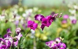 Botanical garden, orchid plants Royalty Free Stock Photos