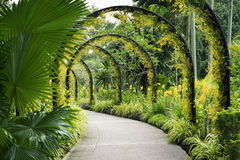 Botanical Garden path. Scenic artificial arcs with many yellow orchid flowers in famous Singapore Botanical Garden Royalty Free Stock Images
