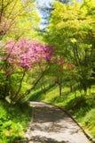 Botanical garden pathway Stock Photography