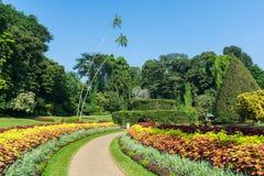 Botanical Garden of Peradeniya, Kandy. Or Royal Botanical Gardens Royalty Free Stock Photography
