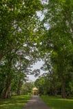 Botanical Garden of Peradeniya Stock Images