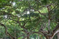 Botanical Garden of Peradeniya Stock Image