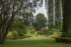 Botanical Garden of Peradeniya Stock Photography