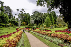Botanical Garden of Peradeniya, Kandy Stock Photos