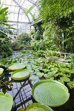 Botanical Garden, Prague stock image