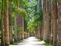 The Botanical Garden in Rio de Janeiro Royalty Free Stock Photography
