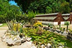 Botanical Garden in Rio de Janeiro Stock Image