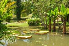 Botanical garden in Rio de Janeiro Stock Photography