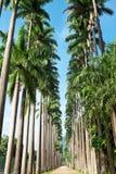 Botanical Garden of Rio de Janeiro Stock Images