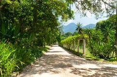 Botanical garden in Rio de Janeiro Royalty Free Stock Image