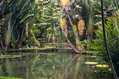 Botanical Garden of Rio Royalty Free Stock Photo