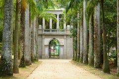 Avenue of Royal Palm Trees. Botanical Garden. stock photography