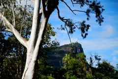 Botanical Garden in Rio de Janeiro Royalty Free Stock Photos