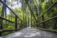 Botanical Garden, Sao Paulo, Brazil Stock Photos