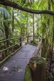 Botanical Garden, Sao Paulo, Brazil Royalty Free Stock Photos