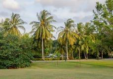 Botanical garden of Singapore. Palms in Botanical garden of Singapore Stock Photo