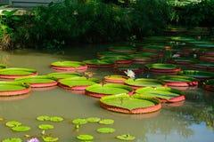 Botanical garden, Singapore Stock Photo