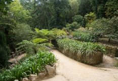 Botanical garden in sintra royalty free stock images