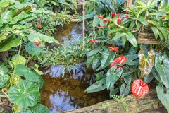 Botanical garden with small creek and flamingo flowers Royalty Free Stock Images