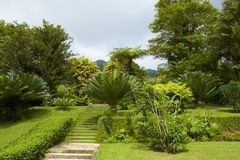 Botanical garden in St Vincent, Caribbean Stock Photos