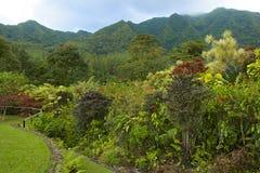 Botanical garden in St Vincent, Caribbean. Montreal gardens in St Vincent, Caribbean Stock Image