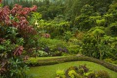 Botanical garden in St Vincent, Caribbean. Montreal gardens in St Vincent, Caribbean Stock Photos