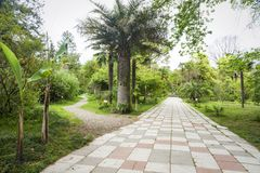 Botanical garden in Sukhumi Royalty Free Stock Image
