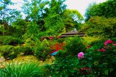 Botanical garden. The botanical garden in summer Royalty Free Stock Photo
