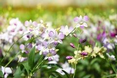 Botanical garden, orchid plants Stock Photos