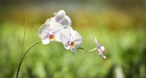 Botanical garden, orchid plants Stock Image