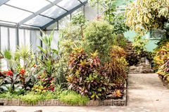 Botanical garden with tropical plants and flowers indoors in sunlight. Tropical plants and flowers. Gardening concept. Indoors of greenhouse with tropical plants stock photos