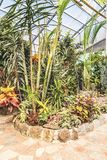 Botanical garden with tropical plants and flowers indoors in sunlight. Tropical plants and flowers. Gardening concept. Indoors of greenhouse with tropical plants stock image