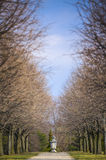 Botanical Garden Walk. A long view down a walk lined with trees Stock Photo