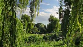 Botanical garden stock video footage